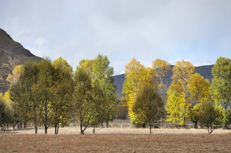 Western China, autumn trees xinduqiao photo