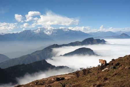 Western Sichuan, China, Cattle Mountain cloud falls Stock Photo - 12941886