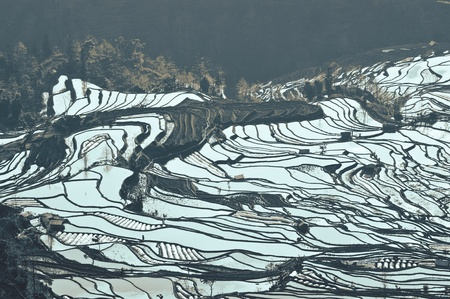 China Yunnan, Yuanyang terraced color Stock Photo - 12988019