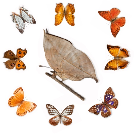Butterfly specimens photo