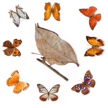 Butterfly specimens Stock Photo - 13325629