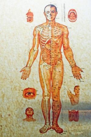 의학: 중국, 중국 의학의 인체 구조 스톡 사진