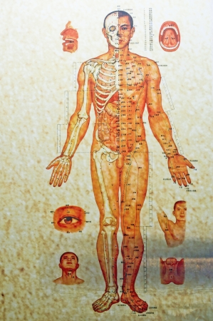 China, Chinese medicine human body structure  Stock Photo - 13956660