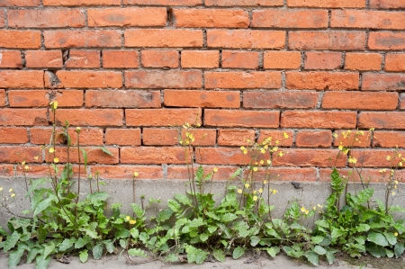 Red brick building wall photo