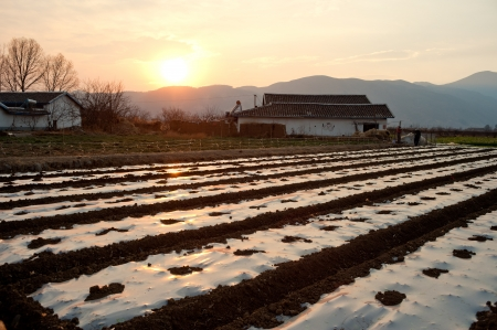 protection of arable land: Twilight field Stock Photo