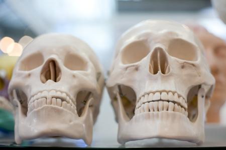 Mannequin skull