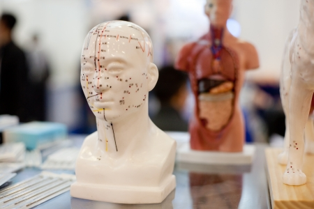 Meridians, the nervous system of the human body model, Stock Photo
