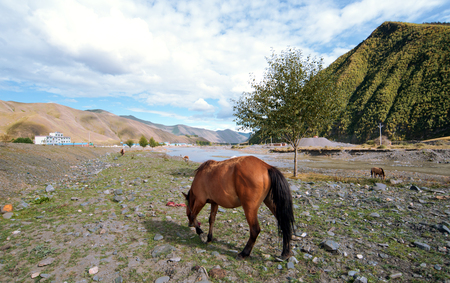 pastoral scenery: Pastoral scenery on the plateau, the horse