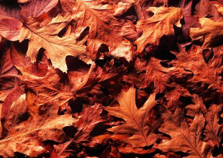permutations: Leaves, design material