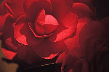 permutations: Flower close-up, design material