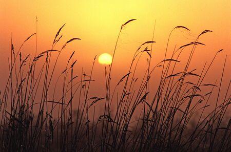 permutations: Evening sunset, design material