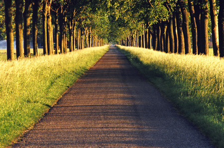 Tree-lined trail, design material Stock Photo