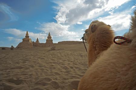 descending: China yinchuan descending sand lakes scenery