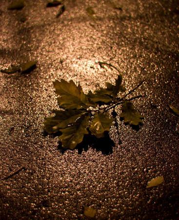 tremble: leaf Stock Photo