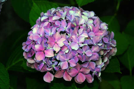 unexplored: This is beautiful flower