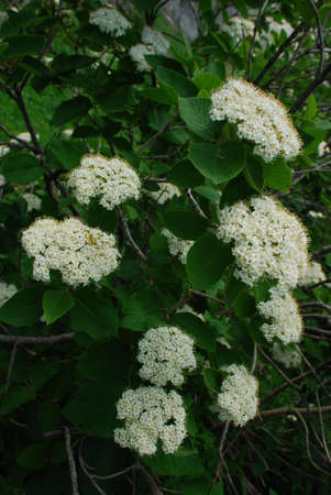This is beautifull flower. Photo - summer 2009. Stock Photo