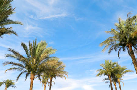 The photo shows palm trees against the sky photo