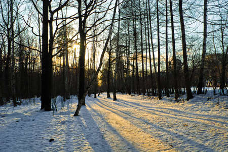 boldino: this photo shows a winter sunset in the woods Stock Photo
