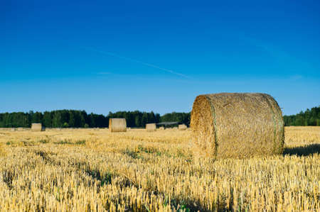 autumn field of haystacks in the Moscow region. Russia Stock Photo
