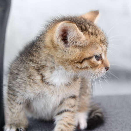 The photograph shows a small kitten. focus on his mustache