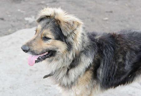 Sad stray dog posing on the street photo