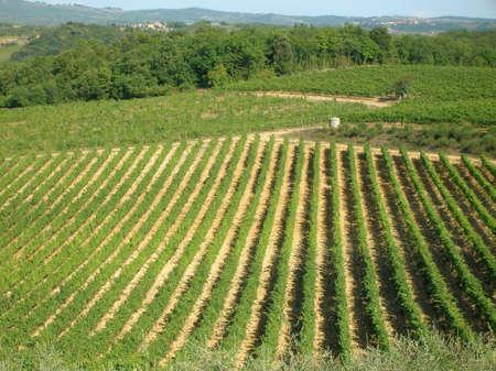 Tuscan fields. Banco de Imagens