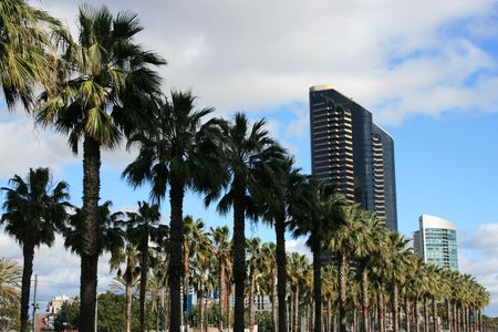 Palm trees along Harbour Drive in downtown San Diego.