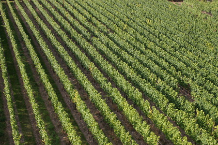 rudesheim: The view of a vineyard in Germany. Stock Photo
