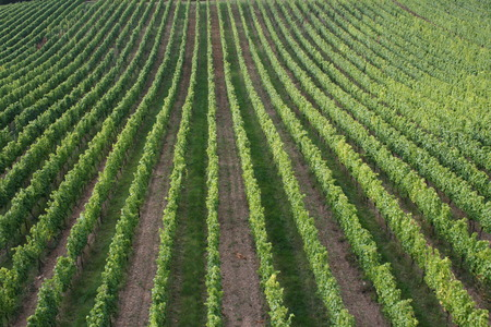 The view of a vineyard in Germany. Stock Photo
