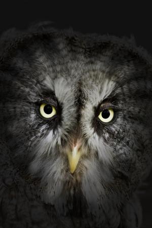 b�se augen: Evil eyes Uhu in der Nacht
