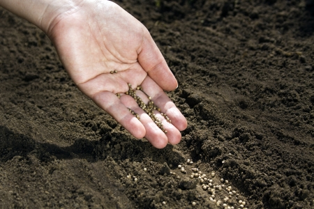 Hand placing seeds on soil Stock Photo