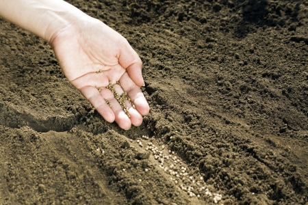 Hand placing seeds on soil Imagens