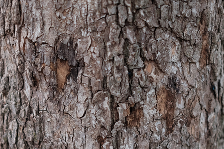 Close up Abstract tree bark background, bark photo, bark background, bark macro, forest tree, tree texture, bark texture. Skin the bark of a tree that traces cracking Stock Photo