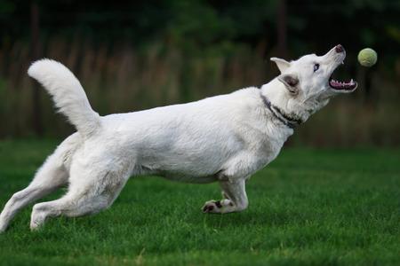 atrapar: ¡Atrapa la pelota!