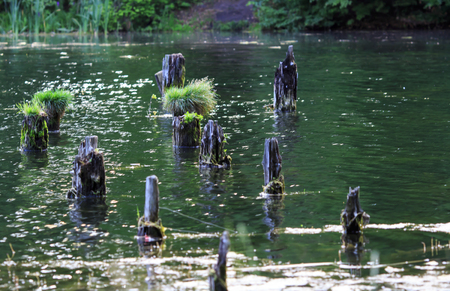 ruined: Ruined pier in the lake