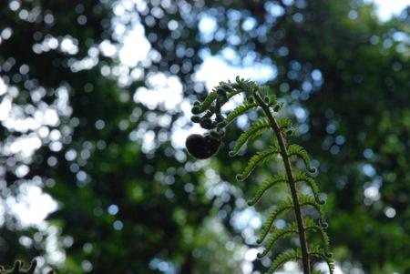 Story of a fern