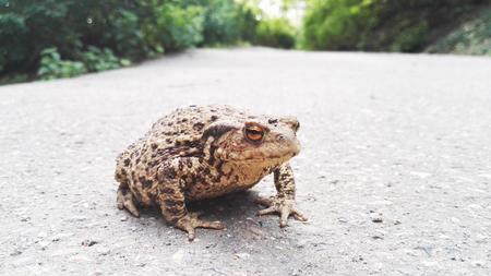 A frog on a city trip Reklamní fotografie