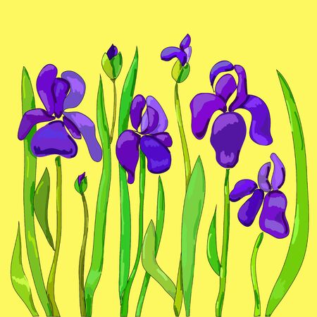 Irise flowers Vector