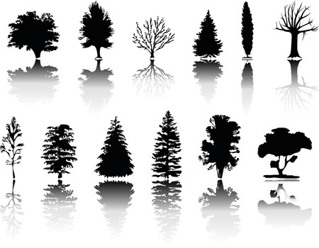Different kind of silhouettes trees Vector