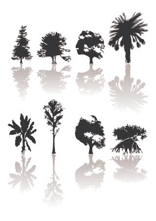 プラタナス: 異なる種類のシルエットの木