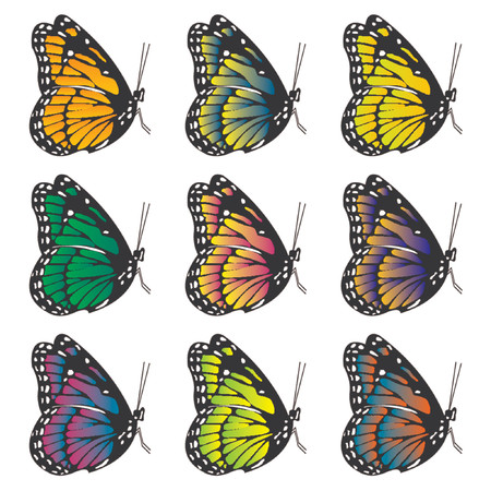 Butterflies with different colors over white background Vector