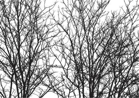coniferous forest: Siluetas de �rboles sobre fondo blanco. Gradientes de colores y pueden ser f�cilmente a�adidos a fondo Vectores