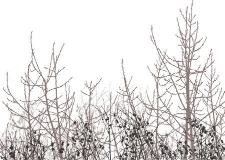 easily: Silhouettes trees over white background. Colors and gradients can easily be added to background