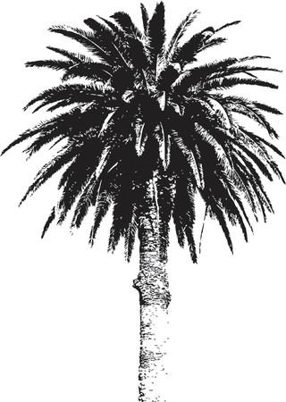 arboles blanco y negro: Palmera silueta aislados sobre fondo blanco Vectores
