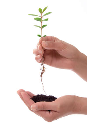 Human hands holding small plant and a piece of soil over white background Stock Photo - 991830