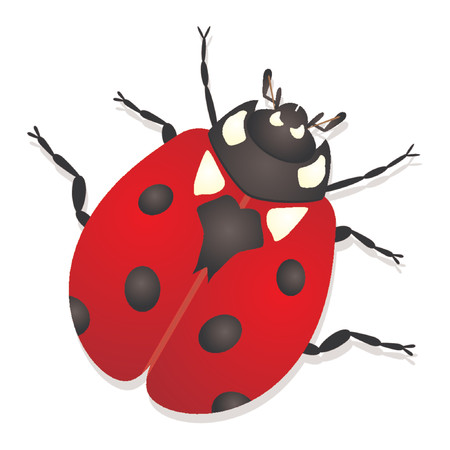 Ladybug isolated over white background Vector