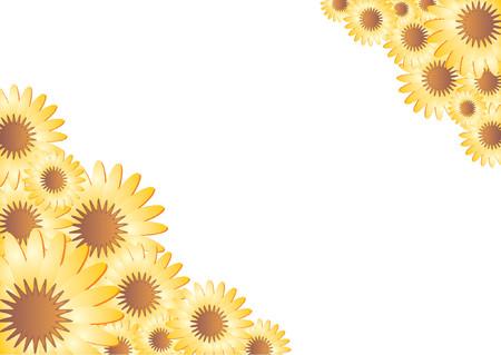cempasuchil: Flor del marco sobre fondo blanco