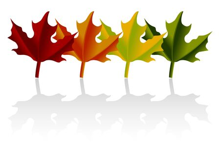 throughout: Maple leaves throughout the year look with shadow Illustration