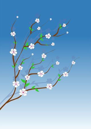 Almond tree with white flowers over gradient blue sky photo