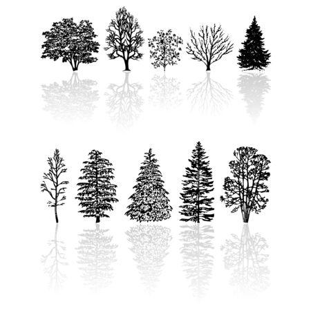 coniferous forest: Diferentes tipos de siluetas de �rboles aislados m�s de blanco